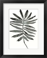 Framed Foliage Fossil VII