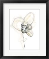 Framed Monochrome Floral Study I