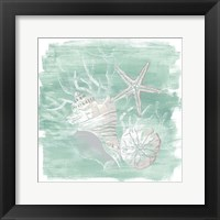 Framed Weathered Shell Assortment I