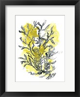 Framed Citron Sea Kelp II