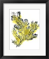Framed Citron Sea Kelp IV