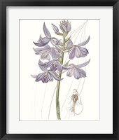 Framed Lavender Beauties III