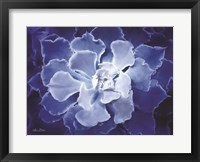 Framed Blue Succulent I