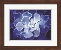Framed Blue Succulent I