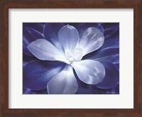 Framed Blue Succulent II