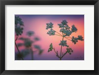 Framed Cow Parsley