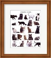 Framed Cats