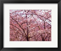 Framed Blossom Pink Trees 2