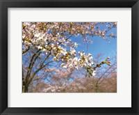 Framed Sudden Blossom 1
