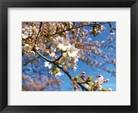 Framed Sudden Blossom 2