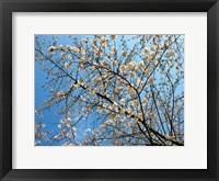 Framed Yellow Blossoms 1
