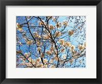 Framed Yellow Blossoms 2