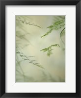 Framed Soft Adagio 1