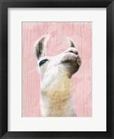 Framed Llama Love 2