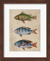 Framed Fish Friends 1