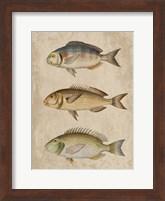 Framed Fish Friends 2
