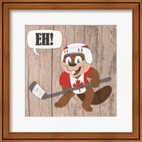 Framed Canadian Beaver
