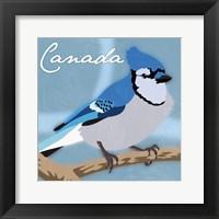 Framed Canada Blue Jay