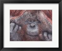 Framed Orangutan 2