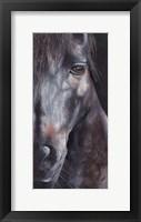 Framed Horse Black