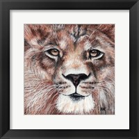 Framed Lion