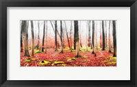 Framed Fall In The Woods