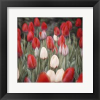 Framed Red Flowers in a Group