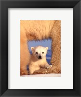 Framed Polar Bear Cub