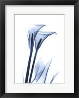 Framed Calla Lily Indigo