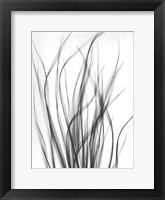 Framed Grass 2