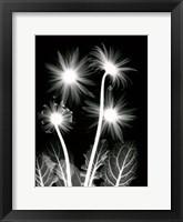 Framed Shinning Florals
