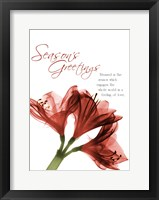 Framed Holiday Amaryllis 1