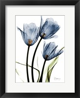 Framed Indigo Infused Tulips