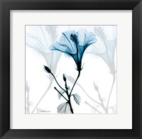 Framed Hibiscus Azure