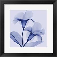 Framed Lavender Lust