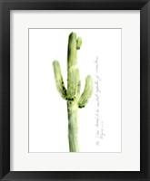 Framed Cactus Verse V