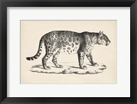 Framed Male Leopard