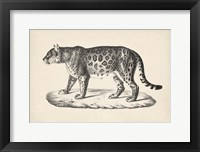 Framed Female Leopard