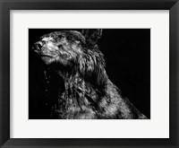 Framed Ursa Major
