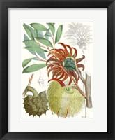 Framed Tropical Variety IV