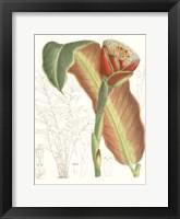 Framed Tropical Variety VII