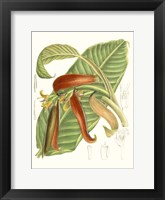 Framed Tropical Variety VIII