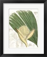 Framed Palm Melange II