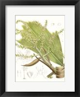 Framed Palm Melange III