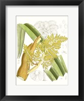 Framed Palm Melange V