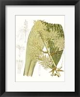 Framed Palm Melange VI