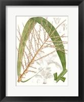 Framed Palm Melange VII