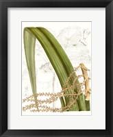 Framed Palm Melange VIII