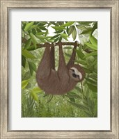 Framed Sloth Hanging Around