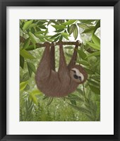 Framed Sloth Hanging Around